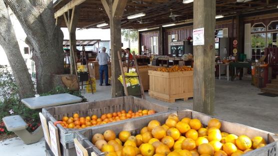 Citrus Citrus Citrus